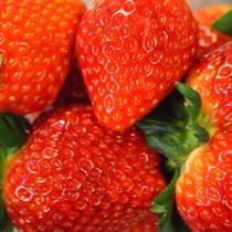 【とちおとめ】 栃木県特産品の甘酸っぱく香り高いイチゴ