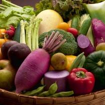 地元産の新鮮な野菜