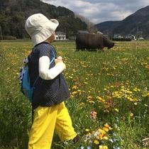 【松崎観光/春】春のイベント・田んぼのお花畑へ是非来てください!