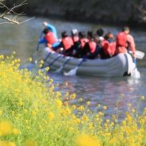 【松崎観光/春】花見船で絶景を満喫できます♪