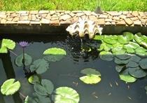 メダカが遊ぶ睡蓮の水辺