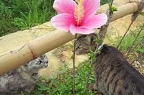 猫とハイビスカス