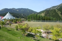 天然芝のグラウンド