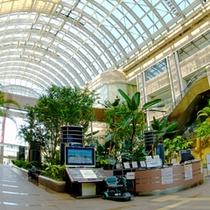 *天井高く開放感に溢れた入口では、沢山の観葉植物がお出迎え♪