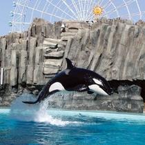 *【名古屋港水族館】当館より車で約20分!大人気の水族館です♪