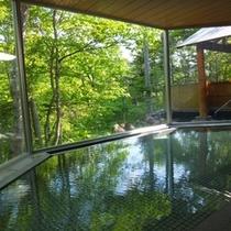緑豊かな木立の湯