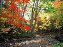 秋の糠平川