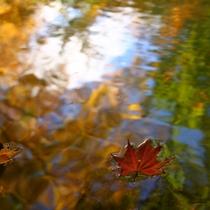 紅葉に包まれる混浴露天風呂「仙郷の湯」