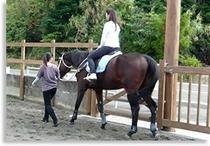 曳き馬の風景