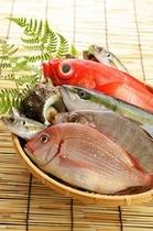 食材 魚介