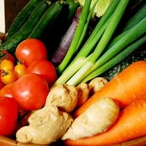 新鮮な野菜を使用!