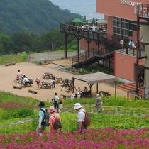 ■山頂レストラン「あるぷす360」と高山植物(五竜高山植物園)