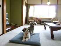 ペット同伴専用10畳和室