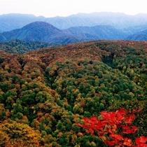 *秋の白神山地の美しさを是非ご覧ください。