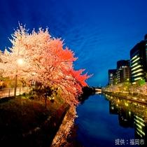 ◎福岡城址◎春は桜が咲き乱れます。