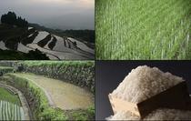 日本の棚田百選に選ばれた有田・岳の棚田で、大切に育てられた特別栽培米