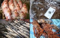 有明・玄海灘産の鮮魚