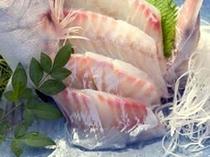 新鮮な桜鯛の刺身