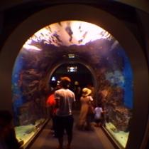 ★名古屋港水族館★当ホテルから9.7km、車で約21分です。