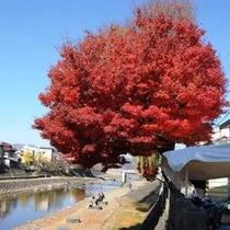 ☆宮川の紅葉