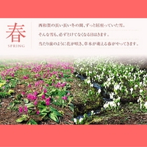 ■春の見どころご案内