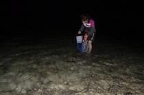 冬の体験できる夜の磯遊び「イザリ」