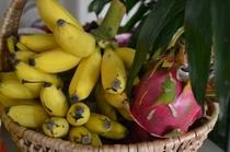 島バナナとドラゴンフルーツ
