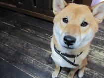 ペット可(室外犬)hana