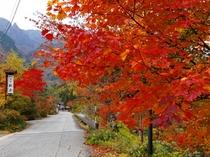 紅葉の観岳周辺。赤や黄色に、鮮やかに色づいた紅葉を眺めながら、お散歩しませんか?