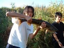 鮭の手づかみ