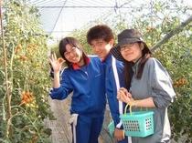 ミニトマトの摘みとり