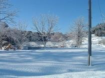 冬のビニールハウス