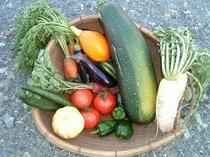 悠遊ファームの野菜