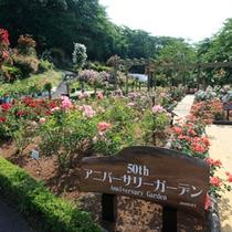 バラ園開園50周年を記念し、「アニバーサリーガーデン」を新設しました