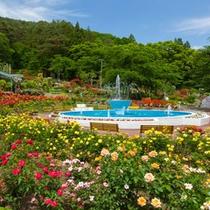 花巻温泉バラ園では6000株を越えるバラが鮮やかに咲き誇ります。