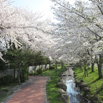 *【桜祭り】高遠城址公園は、「さくら名所100選」に選ばれています。