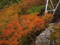 2014年寒霞渓の紅葉