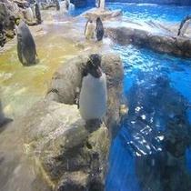 【下関】海響館(ペンギン)