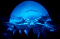 【沼津港深海水族館】駿河湾の深海生物♪ダイオウグソクムシ