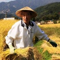 食材-稲刈り