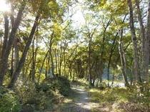 木漏れ日あふれる「おくたま路」散策路
