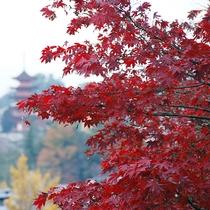 紅く色づく紅葉★