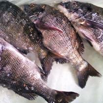 豊浜漁港で水揚げされた新鮮な魚介