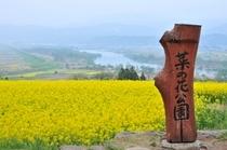 飯山市 菜の花公園