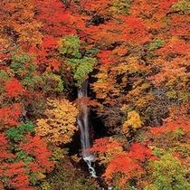 *【周辺】秋山郷の紅葉