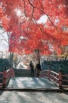 岩手公園紅葉(秋)