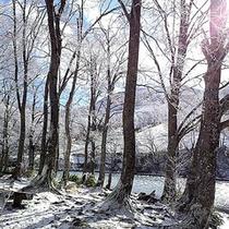*冬景色/美しく、静かな景色に、日常の喧騒を忘れます。