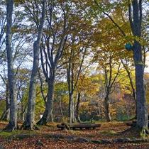 *秋の景観/ドッコ沼周辺も紅葉するので、景色が鮮やかになります。
