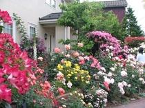 ローズガーデン(近所で評判の老舗「麩市」のお庭です)当館よりすぐ!