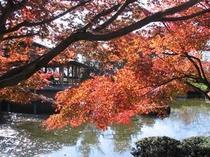 11月、西山公園の紅葉(当館より車で20分)